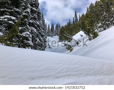 Snowy evergreens & mountain tops. Take a look at these beautiful shots of Washington States Mount Rainier. #1421832752