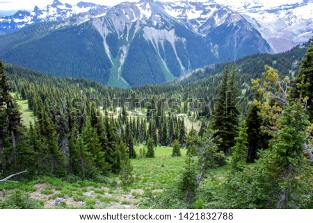 Snowy evergreens & mountain tops. Take a look at these beautiful shots of Washington States Mount Rainier. #1421832788