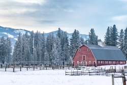 Snowy Farm: Classic Red Barn and Old Wooden Fence  at the Edge of an Evergreen Forest - Methow Valley, Washington, USA (Winter)