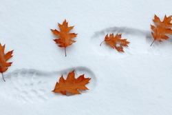 Snowy footsteps with autumn leaves