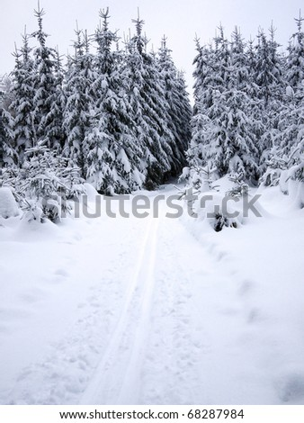 Snowy forest and cross-country ski trail in the mountains