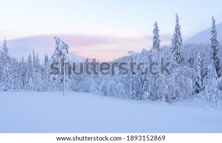 Snowy forest and fell in Finland's Lapland Stock photo ©