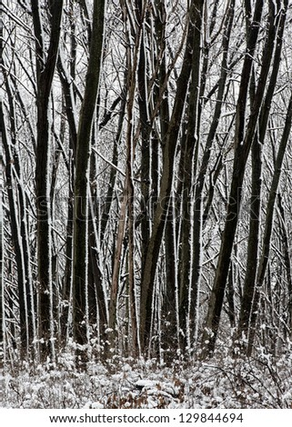 Snowy forest in the Cook County Forest Preserves outside of Chicago, Illinois