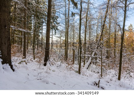 snowy forest in the Harz Mountains of Germany #341409149