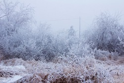 Snowy forest on a gloomy day tree covered with snow. Snow-covered winter steppe during fog. Trees and grass covered with frost