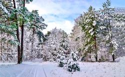 Snowy forest on winter landscape
