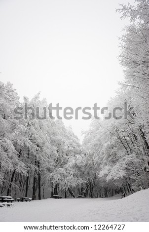snowy forest scene - stock photo