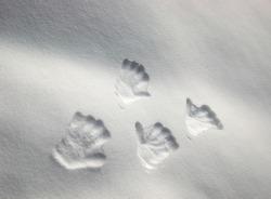 Snowy hand prints