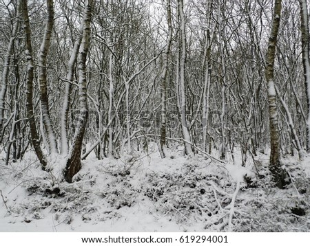 Snowy landscape in the Netherlands #619294001