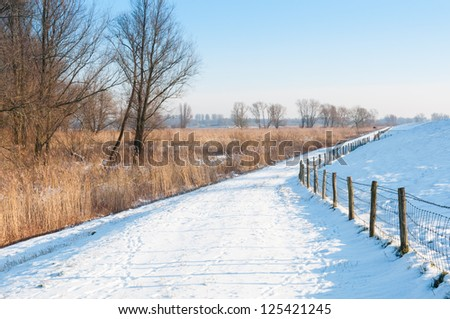 Snowy landscape in winter with a fence, golden reed and bare trees.