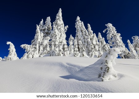 Snowy landscape with trees - stock photo