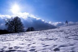 Snowy meadow in the backlight.