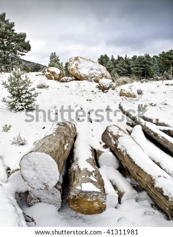 Snowy mountain landscape with some trunks in the foreground as a vanishing point in the composition