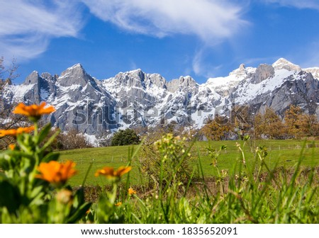 snowy mountains in Picos de Europa, Spain, with beatiful orange flowers in the foreground in an amazing sunny day Stockfoto ©