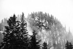 Snowy peaks soar above the clouds in the Cascade Range.