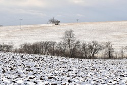 Snowy plowed field, row of trees in the background. Winter landscape on the farm.