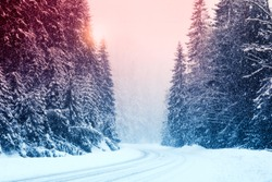 Snowy road and conifer forest on winter day. Color tone