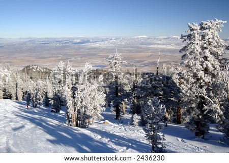 Snowy ski slope with two skiers among snow-encumbered pines extending into Nevada desert at Lake Tahoe.