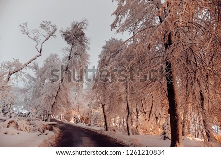 snowy trail in a fabulous park dotted with moonlight in the middle of the city in the cold winter. winter weather, christmas tree, evening lantern in Kiev, Ukraine.