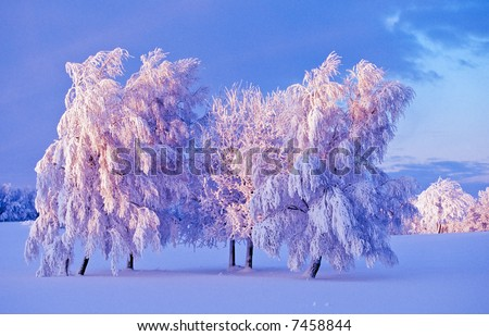 Snowy tree at dusk on the field