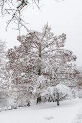 Snowy tree in a snow-covered park in dreary weather..