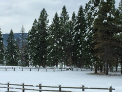Snowy trees Behind. Fenceline in Montana