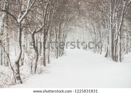 Snowy tunnel among tree branches in parkland close up. Snowy white background with alley in grove. Path among winter trees with hoarfrost during snowfall. Fall of snow. Atmospheric winter landscape.