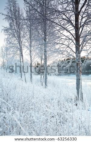 snowy winter landscape