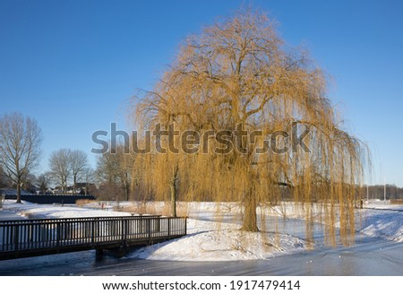 Snowy Winter landscape with weeping-willow near canal in residential area of Urk, The Netherlands Stock photo ©