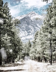 Snowy winter scene with dirt road in the woods of Flagstaff, Arizona leading to tall snow-capped Humphrey's Peak mountain