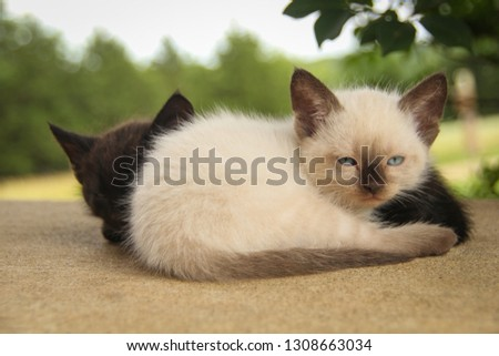 Snuggling White Kitty with Black Kitty Outside #1308663034