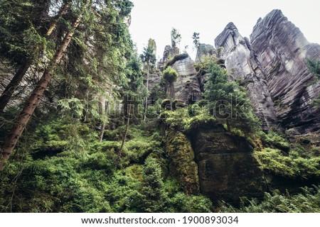 So called 'Siberia' - picturesque  ravine in Teplice Rocks, part of Adrspach-Teplice landscape park in Czech Republic  Stok fotoğraf ©