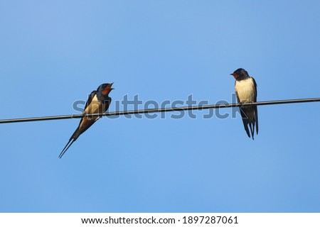 Photo of  Socially distanced birds tweeting on the line