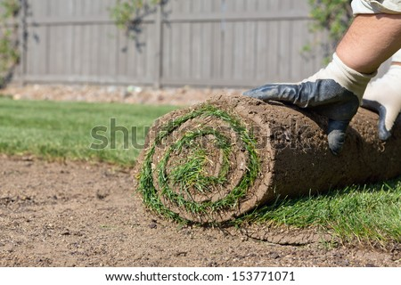 sod for new lawn