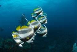Sodwana Bay Dive Spots
