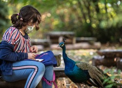Sofia, Bulgaria, Oct 26 2020: A girl in protective mask is playing with a beautiful peacock in Sofia zoo