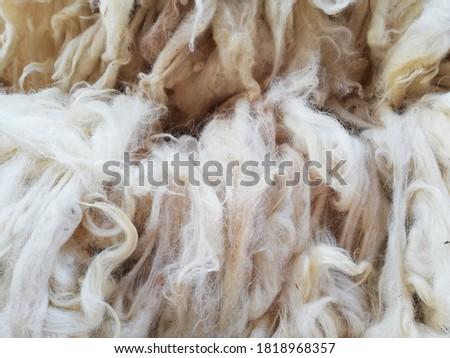 Soft, and fluffy sheepskin - wool. Doğal Renkte Yıkanmamış Çiğ Koyun Yünü Stok fotoğraf ©