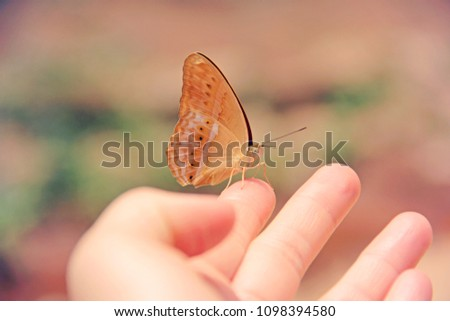 soft and pastel filtered of butterfly sitting on human fingers, selective focus for abstract eco friendly and trusting concept #1098394580
