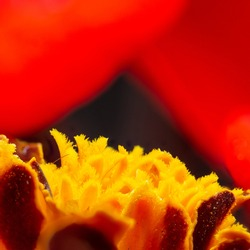 Soft artistic background of red and yellow flowers