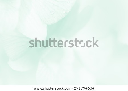 Soft background orchid flower in soft and blur style