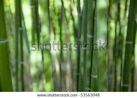 soft bamboo trunks