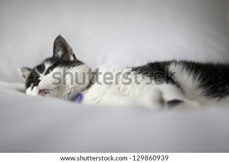 Soft Black and White Cat Lounging on Fluffy White Bed - stock photo