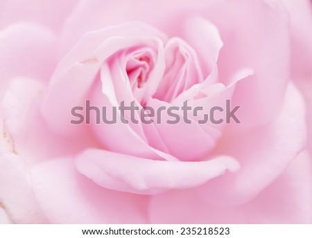 Soft blur light pink rose flower background ez canvas soft blur light pink rose flower background mightylinksfo