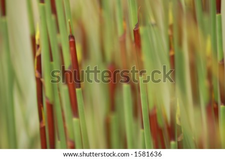 Soft Blurred Background of Grasses