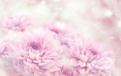 Soft blurred of gerbera flowers with soft bokeh in pastel tone for background.