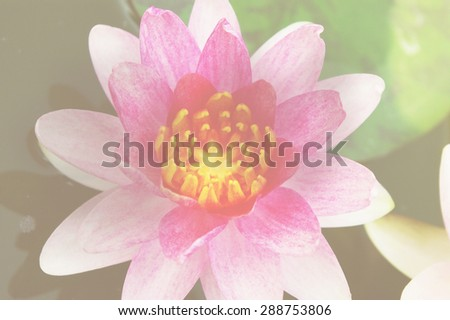 Soft color flower in soft focus retro style background, Purple Lotus
