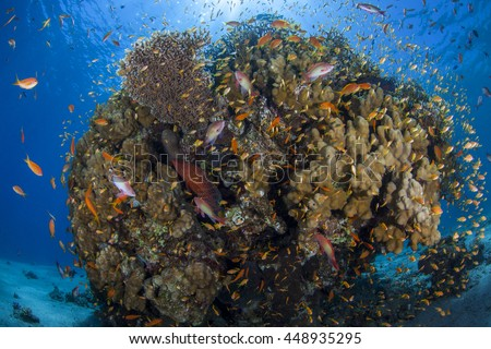 Soft coral, hard coral reef. Fish, underwater scenery.  stock photo