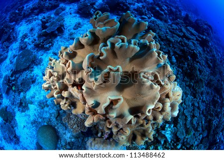 Soft coral in the reef