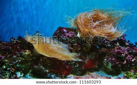 Soft Corals , Ocean Algae, and French Grunts Underwater