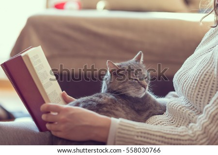 Soft cuddly tabby cat lying in its owner's lap enjoying and purring while the owner is reading a book. Focus on the cat; warm, cozy, domestic atmosphere, selective focus